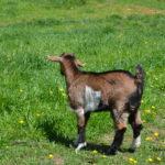 Seven Freedoms Farm SallieS
