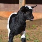 Seven Freedoms Farm John Deere2
