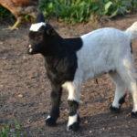 Seven Freedoms Farm John Deere3