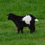 Seven Freedoms Farm Maggie CowhigSeven Freedoms Farm Maggie CowhigSeven Freedoms Farm Eldridge