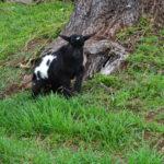 Seven Freedoms Farm Eldridge2
