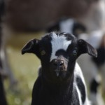 Seven Freedoms Farm Samson Sieve