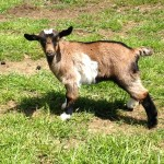 Seven Freedoms Farm Sally Schoonover1